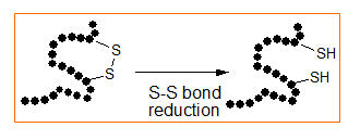 S-S bond reduction